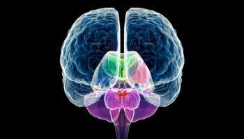 Healthy Brain, Better Sex